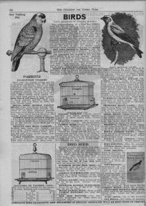 Iowa Seed Company-1913_birds