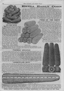Iowa Seed Company-1913_corn