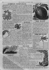 Iowa Seed Company-1913_curious vegetables