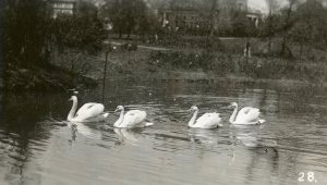 The swans at VEISHEA, 1936