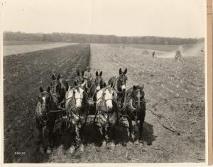 Plowing a field with horses, undated, RS 16/03/M