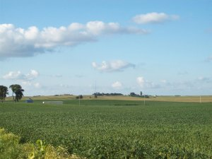 We're more than just corn. We also have soybeans. Hamilton County, Iowa, summer 2011. Photo courtesy of myself.