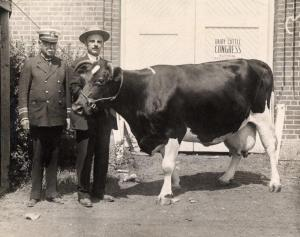 "A farmer with his dairy cow in front a sign that reads: ""Dairy Cattle Congress: National Belgian Show,"" 1927. RS 16/03/G"