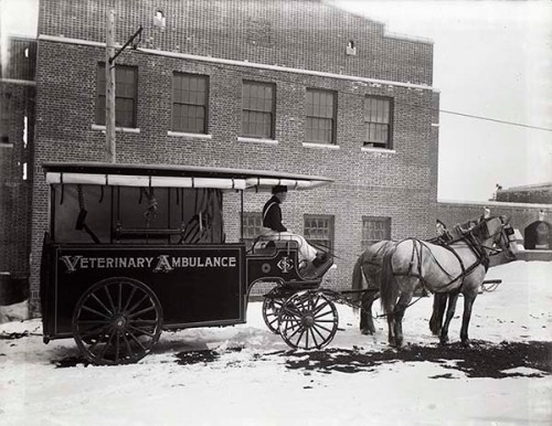 "Black and white photograph show a hore-drawn wagon that is labeled ""Veterinary Ambulance"" standing in front of a building with snow on the ground."