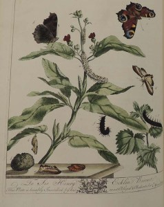 The Aurelian. A natural history of English moths and butterflies, together with the plants on which they feed. Also a faithful account of their respective changes, their usual haunts when in the winged state, and their standard names as established by the Society of Aurelians. / Drawn engraved and coloured from the natural subjects. By Moses Harris. 1766. (QL542.4 H242a)