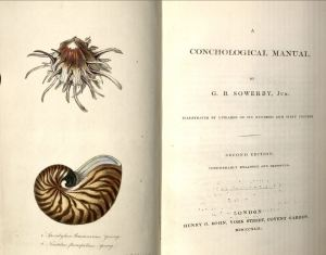 conchological manual