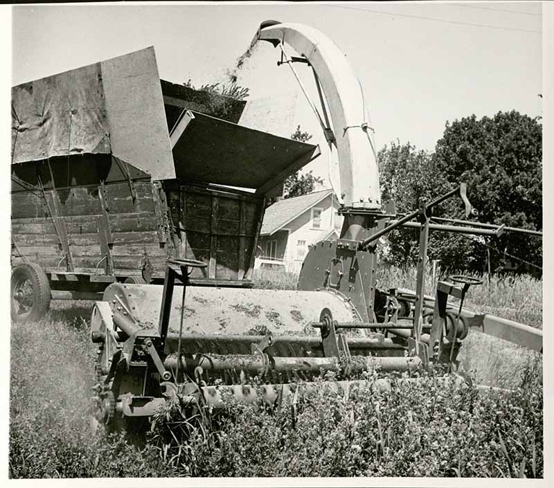 Alfalfa leaf harvester, circa 1966. Wesley Fisher Buchele Papers, RS 9/7/52, Box 19, Folder 1.
