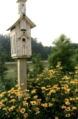 Bird house in Reiman Gardens (RS 5/7/3/0/5, box 1, folder 1)