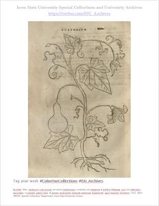 Otto Brunfel's Herberum vivae eicones. Call number: QK41 .B835h.