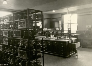 Vitamin research lab 11/13/1928 from box 961 University Photographs