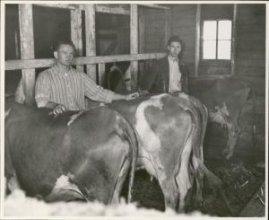 Two men stand next to 4 cows inside dairy barn.