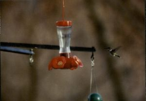 hummingbird and feeder