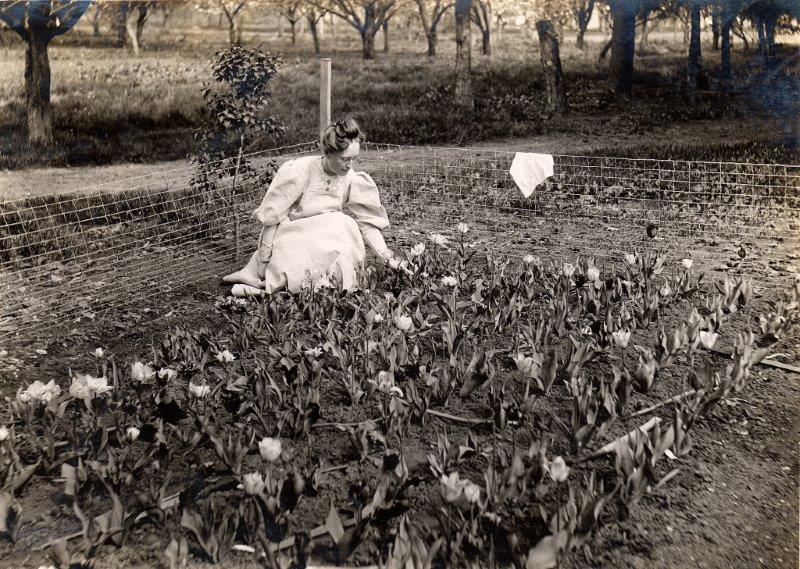 Woman in a tulip garden, undated. [collection/box #]