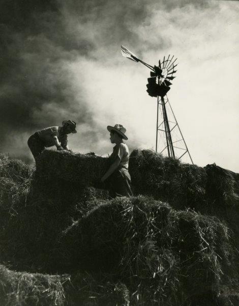 Two farmers lifting hay bales on the farm, (year?). University Photographs, box (#)