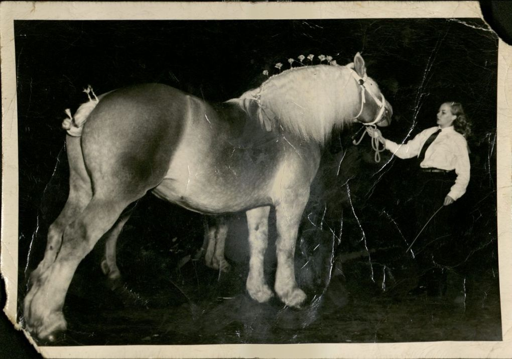 Norma showing a horse