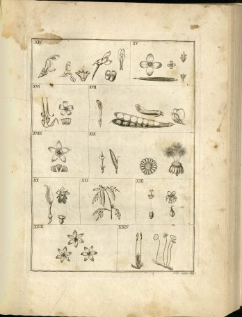 Illustrations of plants with varying numbers of stamens.