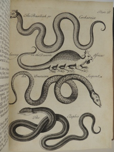 """Black and white engraving of four different serpents: two of """"the Basilisk or Cockatrice living in the Desarts of Africa,"""" an American serpent, and the elaphis. The top image of the basilisk or cockatrice shows a snake like creature wearing a crown on its head. The second of the two show a creature with a long tail, four pairs of legs, and a bird-like head wearing a crown."""