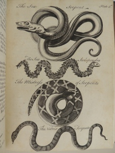 Black and white engraving of four creatures: the sea serpent, the sea scolopendra, the mistress of serprents, and the natrix torquata. The sea serpents is looped multiple times around intself with a large head, large eye and rows of teeth. The sea scolopendra is shown with a feathery-looking coat down its entire body.