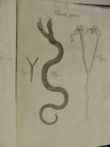 Illustration shows three figures in the shave of a Y, one of which is a two-headed snake.