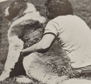 A student sitting with their arm around a Saint Bernard dog, both are facing away from the camera.